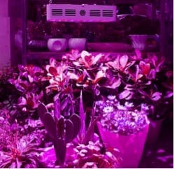 Bestva DC Grow Light 1000w Review