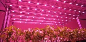 size led grow lights