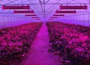King Plus 1200W grow room