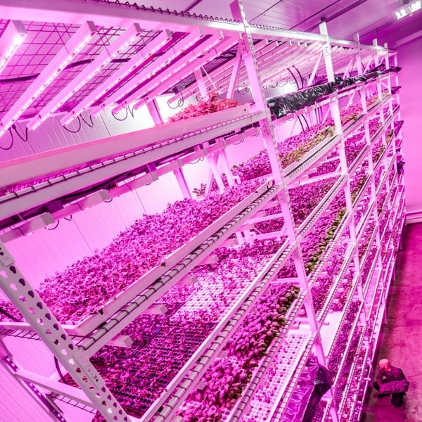 LED Grow Lights Pros and Cons