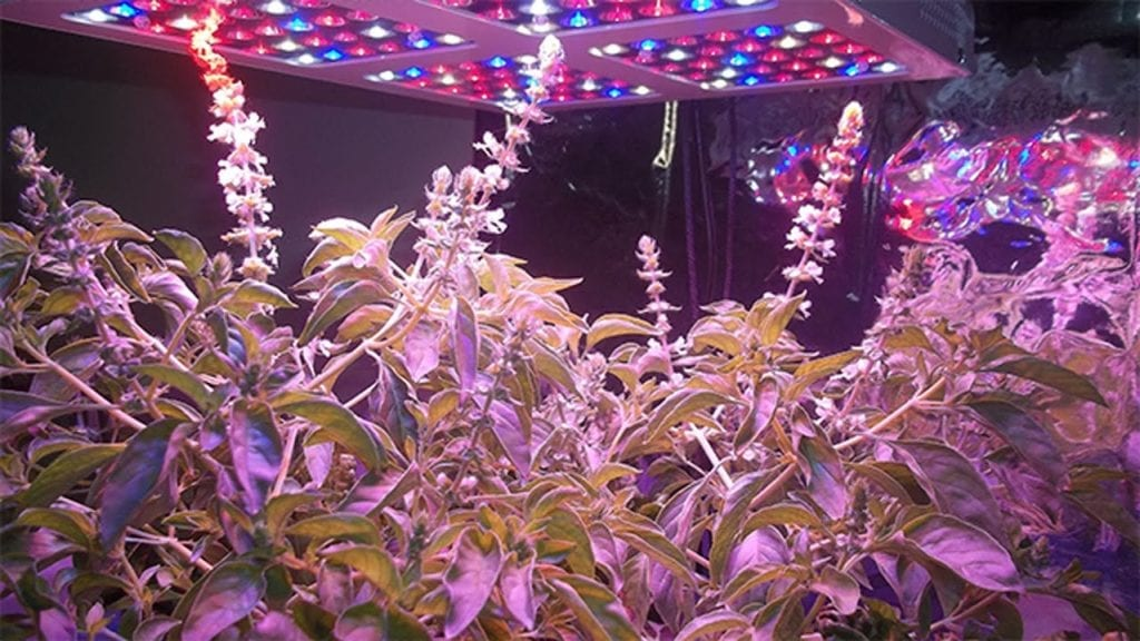 LED grow light Pros and cons