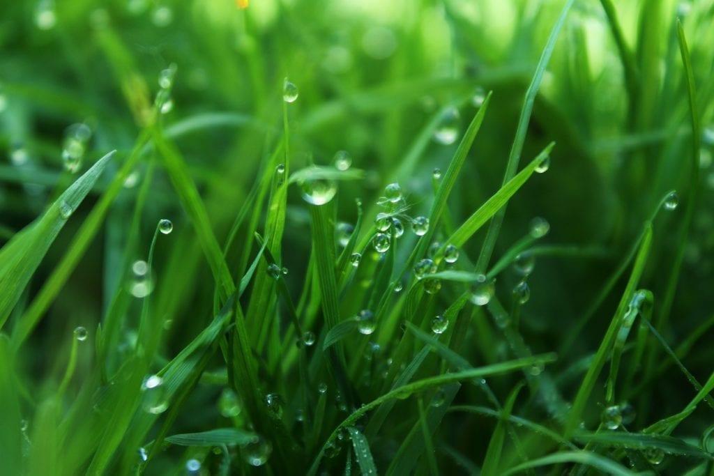 grass humidity