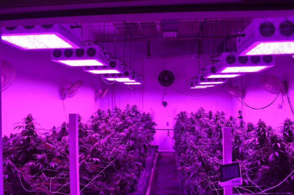 1000 watt LED Grow Light