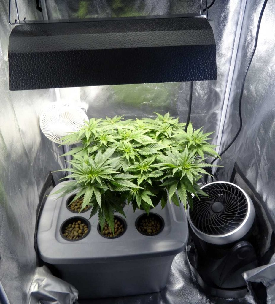 how many plants to maximize grow space