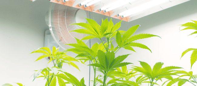 inline fans for marijuana