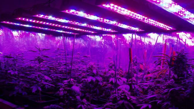 led grow light marijuana