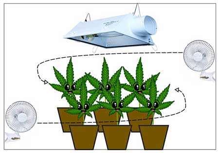 proper air circulation for marijuana growth