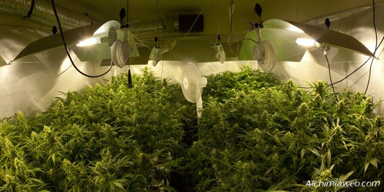 ventilation for marijuana grow rooms