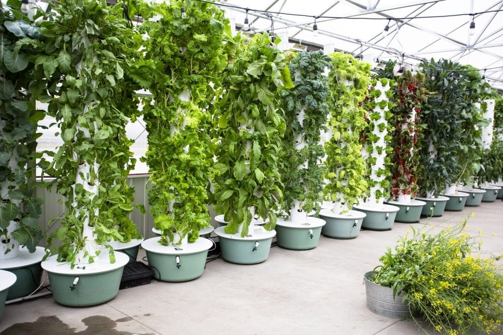 6+ Top Hydroponic Tower Gardens of 2020