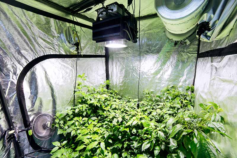 grow room ventilation systems