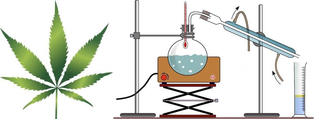 Cannabis distillation process