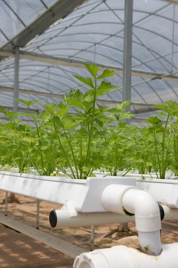 best hydroponic reservoirs