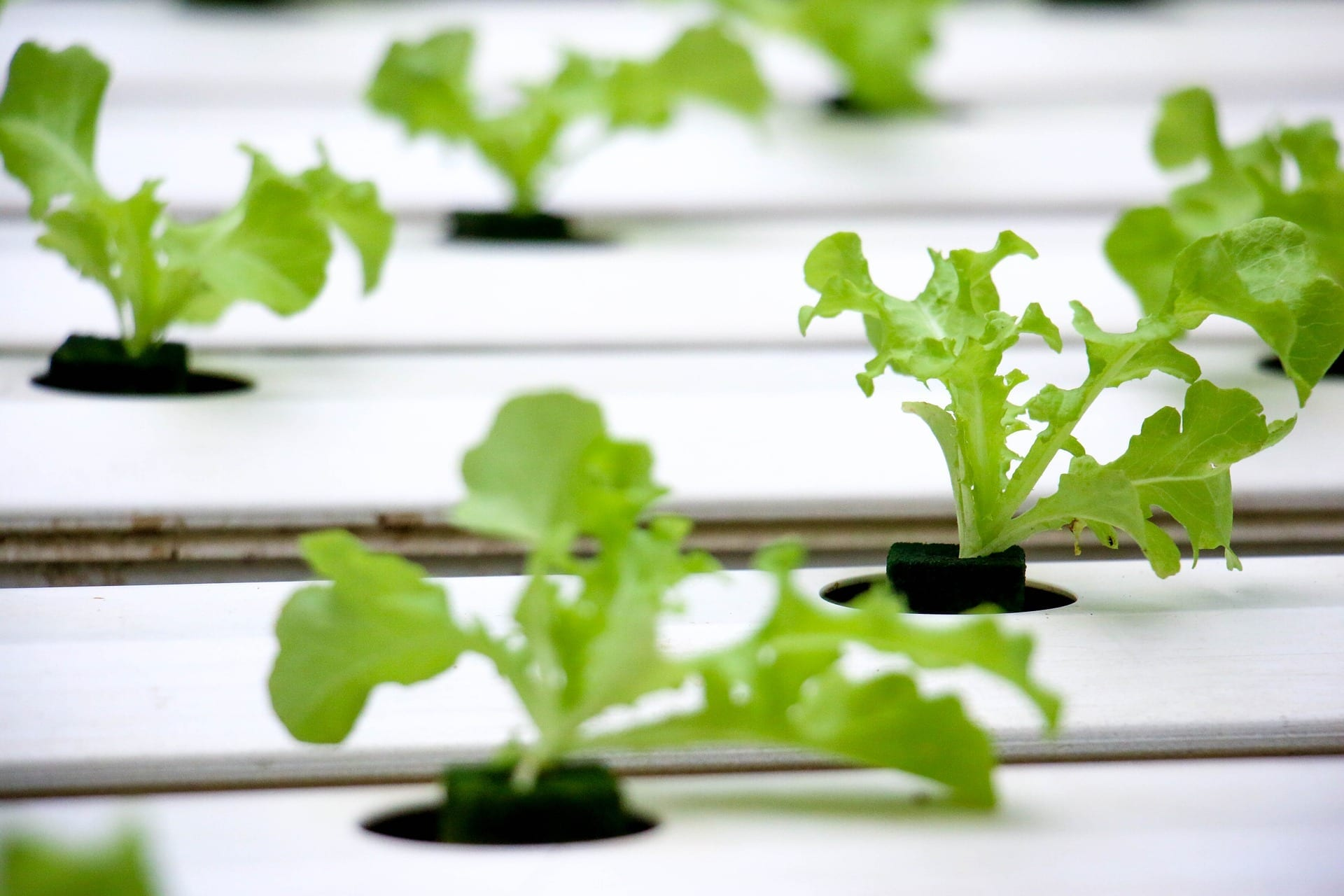 Best Hydroponic Reservoirs 2020 | Complete Guide
