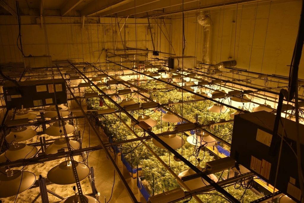 How to make sure that your plant receives sufficient light