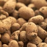 Hydroponic Clay Pebbles | All You Need To Know