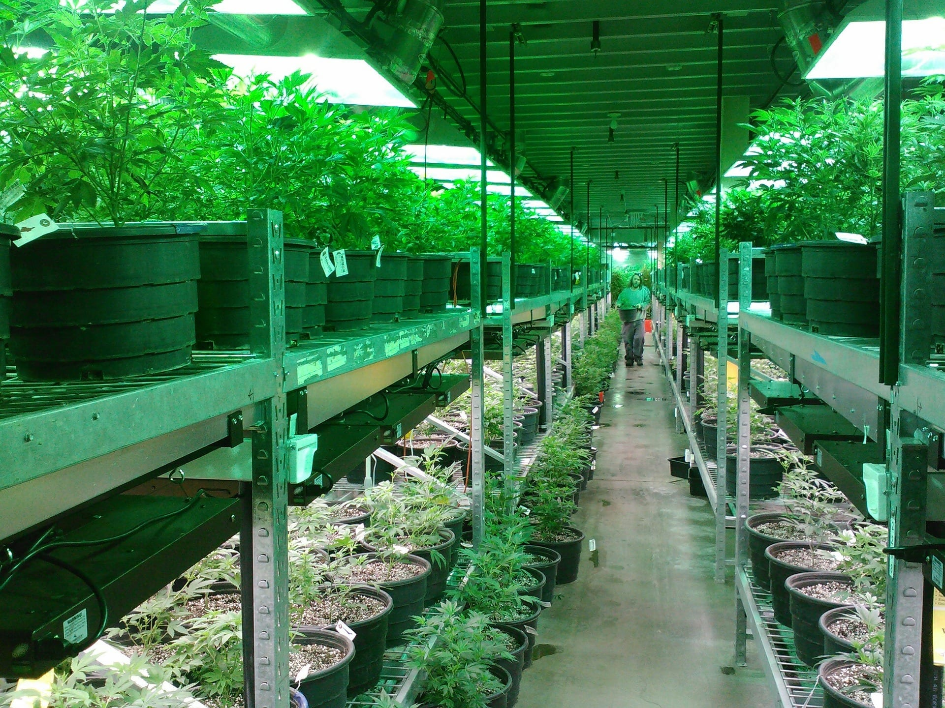 Grow Room Ventilation | A complete guide