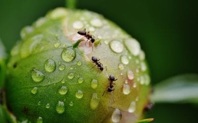 How to Get Rid of Ants in Plants?   Complete Guide