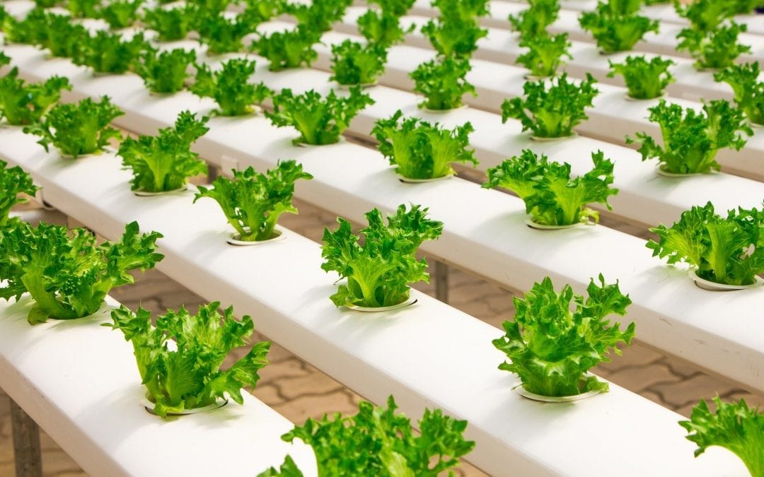 How Does Hydroponics Work? | Short Introduction