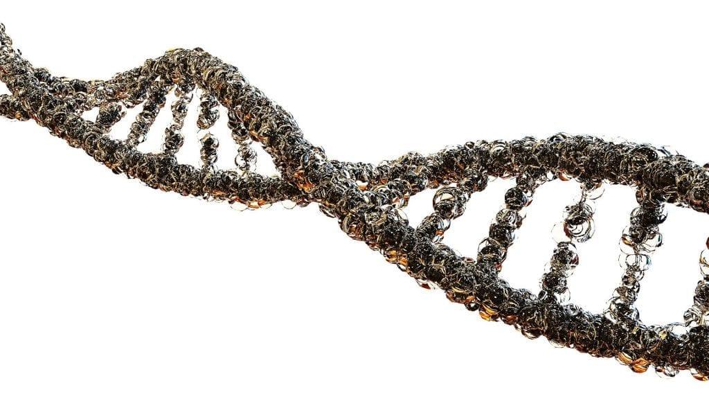genetic factors cannabis