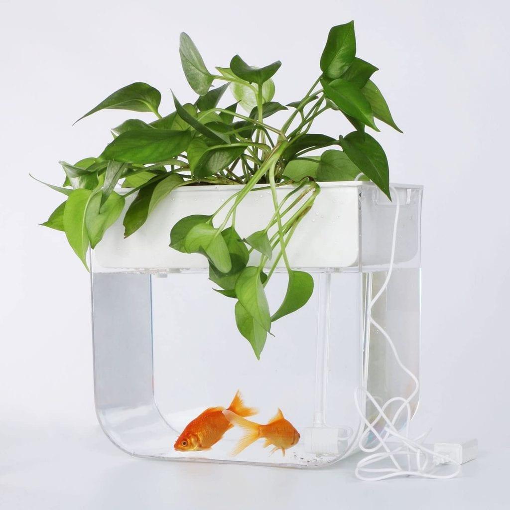 Joyfay Aquaponic Fish Tank