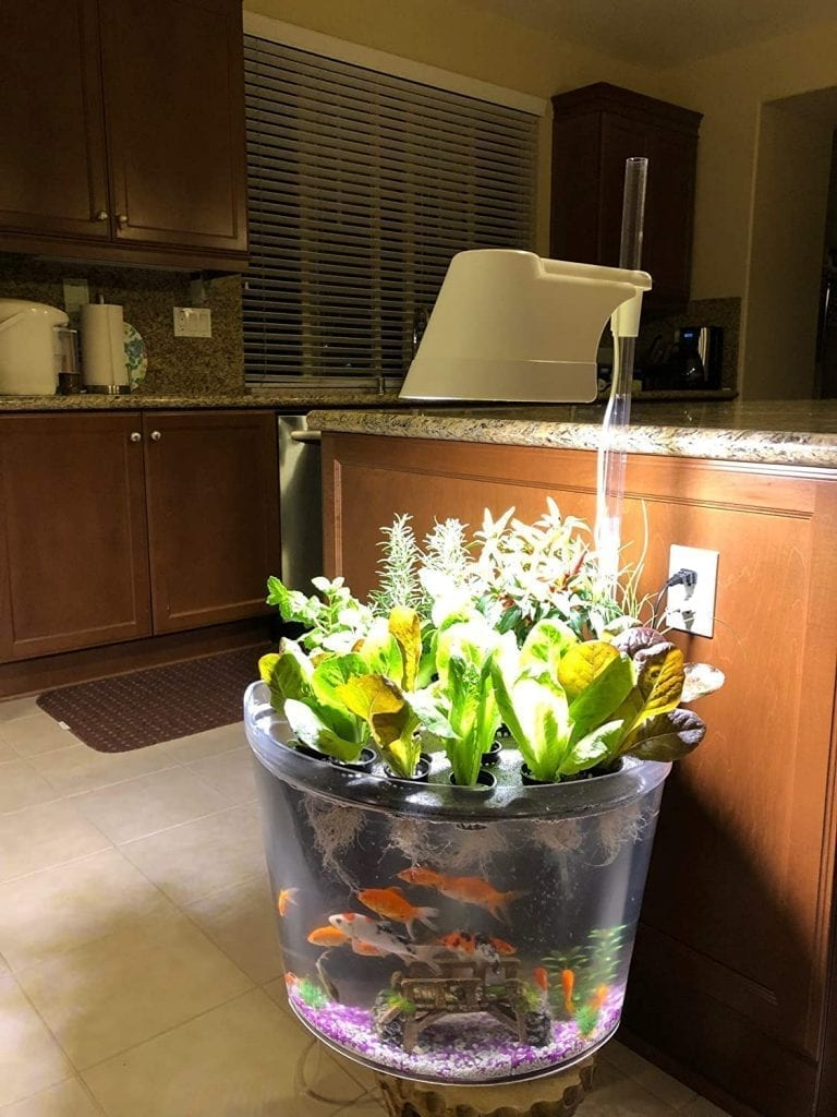 Kingro 5 in 1 Indoor Gardening Ecosystem Hydroponic