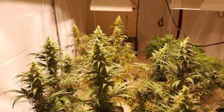 Cannabis Grow Room Setup