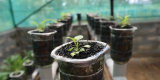 Kratky Method - hydroponic system