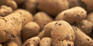 Hydroponic Clay Pebbles