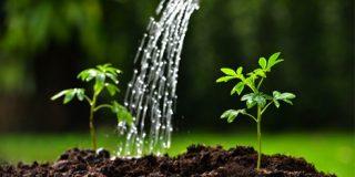 Control Grow Room Humidity